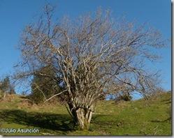 Selva de Irati - Avellanos de Orión