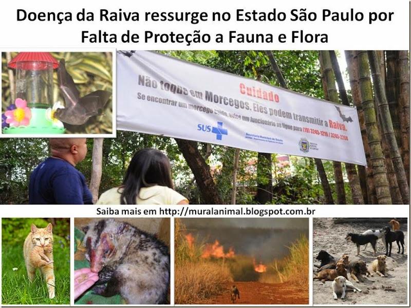 Doença da Raiva ressurge no Estado São Paulo