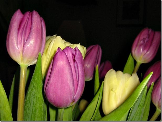 macro tulipbukett
