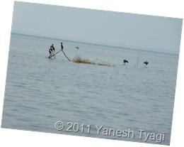 Cormorant @Kumarakom (Yanesh Tyagi)