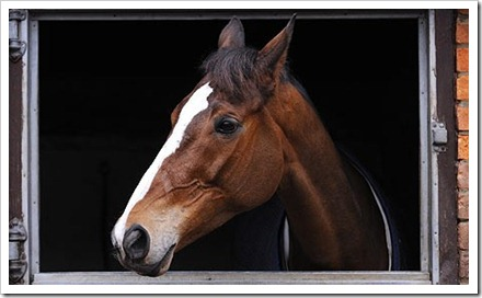 Kauto photograph Tom Jenkins