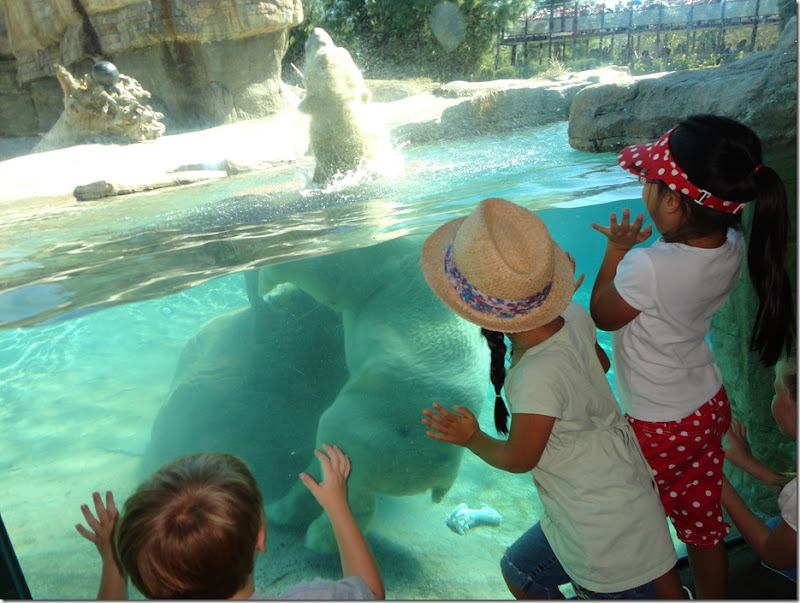 SD Zoo 047