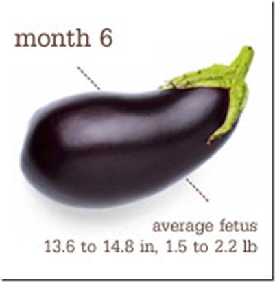 Eggplant - Month 6