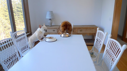 And we even get to eat at the dining room table!