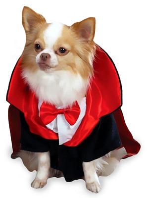 perros vampiro 1 2 (2)