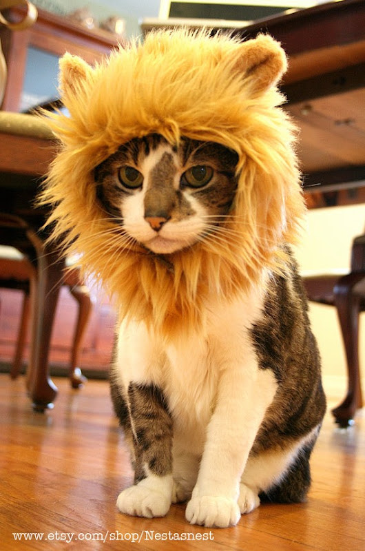 Lion Hat for Your Cat from Nestanest on Etsy