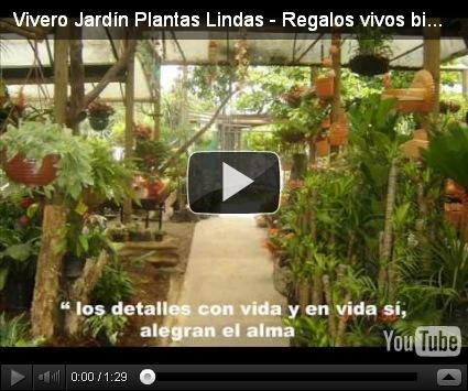 Como decorar un jard n con plantas grandes dise o y for Como decorar mi jardin con plantas
