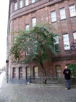 006 Trädet där de fina bären är.vid Gleisdreieck