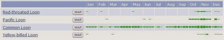 Loon Bar Chart 1
