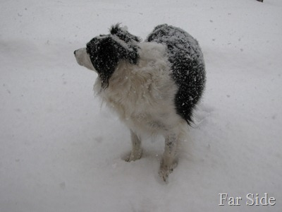 Chance in the snow