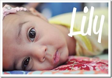 lily-profile
