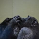 Heidelberger-Zoo_2012-04-09_797.JPG
