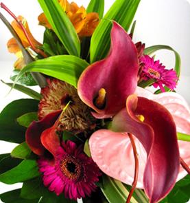vivero de plantas exoticas flores ex ticas para jard n dise o y decoracion de