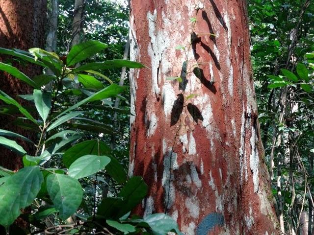 Forêt équatoriale (8)