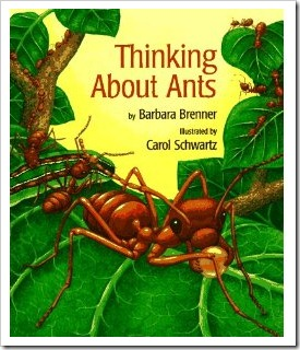 ants thinking about