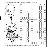 Sistema digestorio 2.jpg