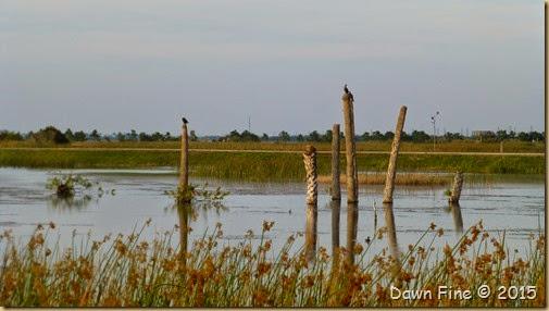 Viera Wetlands (67)