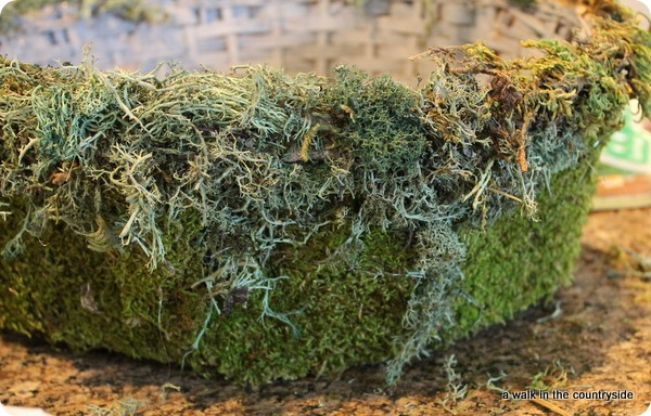 PB inspired moss basket