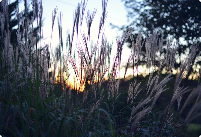 grasses at sunset amy renea a nest for all seasons