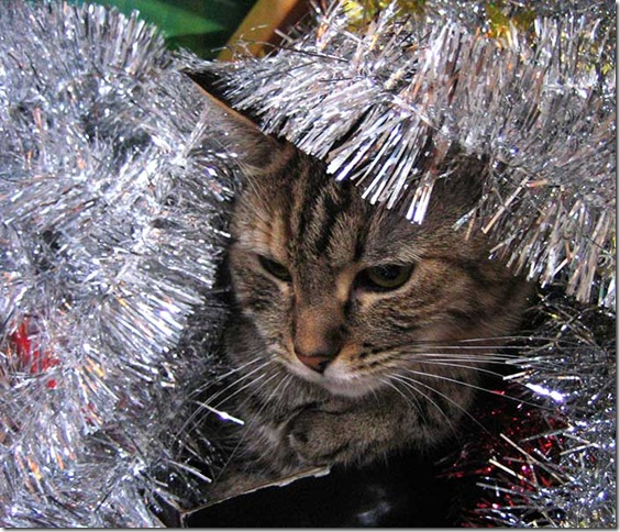 kitty-tinsel-1548