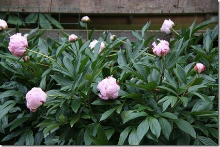 bloemenkraam