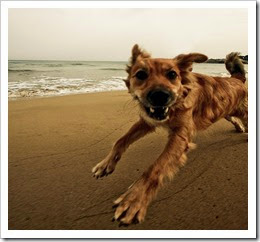 Cachorro na praia é uma dádiva
