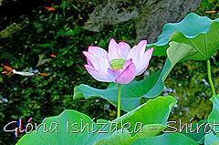 85 - Glória Ishizaka - Shirotori Garden