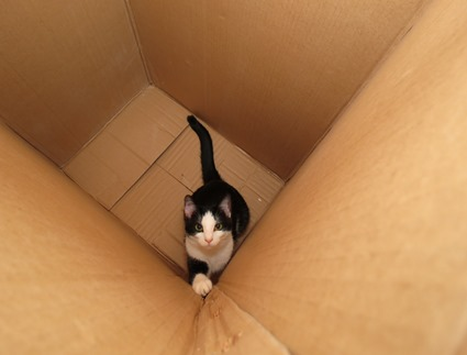 lucy-in-a-box