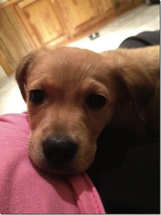 cute-puppies-awww-4