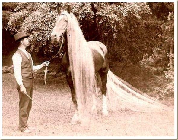Linus le cheval aux crins les plus long du monde (7)