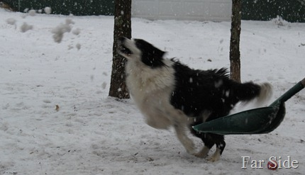 Chance chasing snow