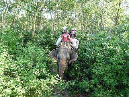 Safari elefanti