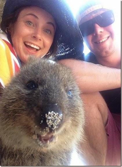 selfies-australian-quokka-007