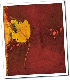grunge-leaf-1434301-m