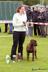 20100513-Bullmastiff-Clubmatch_30968.jpg