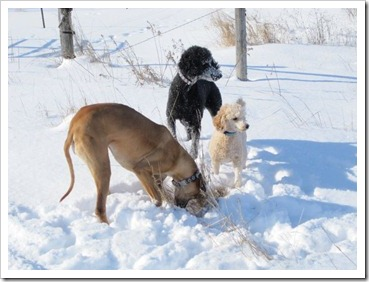20120228_dogs-snow_004