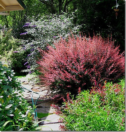garden-barberry-and-butterfly-bush