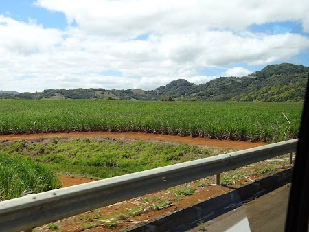 Plantatii trestie de zahar Mauritius