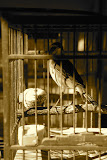 Shanghai - Pets market - L'oiseau dans la cage