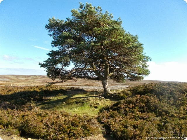 the christmas tree on bolt's law