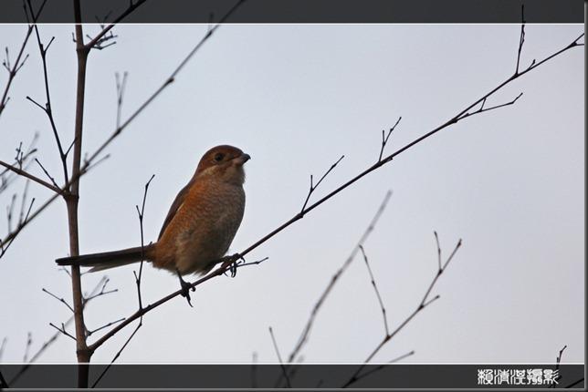 bird0719