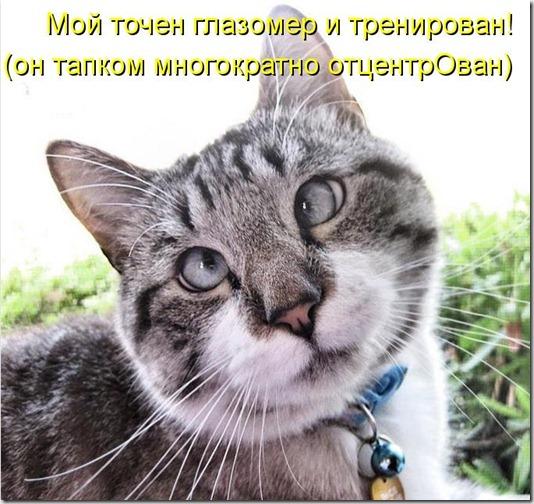 kotomatritsa_X