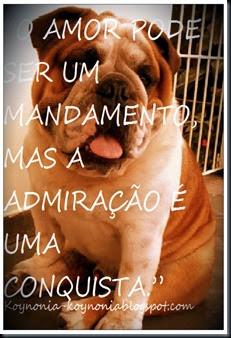 cachorro e admiração