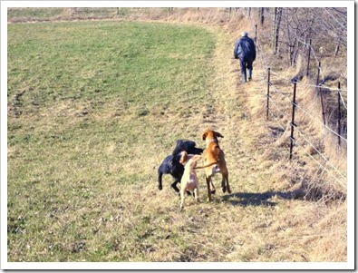 20120402_dogs_005