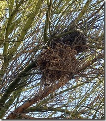 verdin nest double decker 8-10-2013 2-14-52 PM 1597x1828