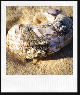 shell13