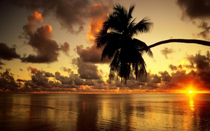 SUNSET_PALM