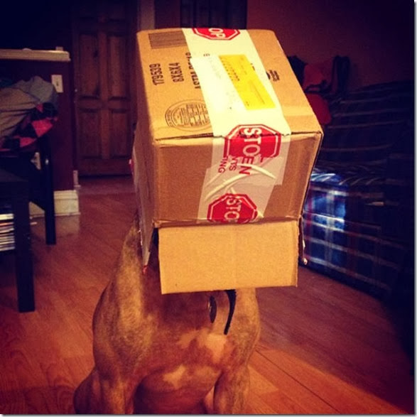 stacking-dogs-head-9