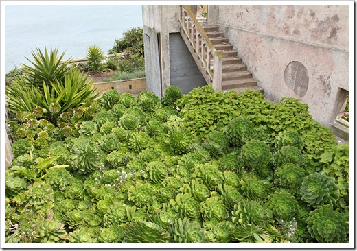 120408_Alcatraz_191