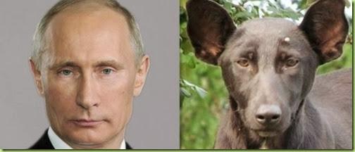 Vladmir-Putin-dog-e1379686195518